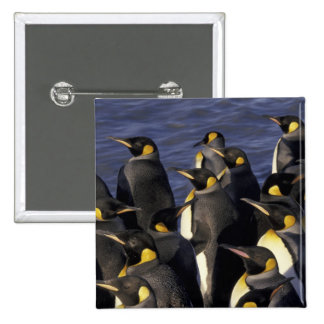 Antarctica, South Georgia Island. King penguins 2 2 Inch Square Button