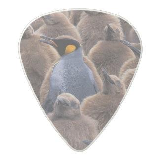 Antarctica, South Georgia Island, King penguins Acetal Guitar Pick