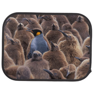 Antarctica, South Georgia Island, King penguins Car Carpet