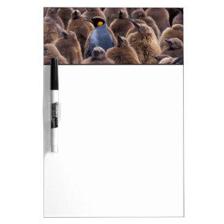Antarctica, South Georgia Island, King penguins Dry Erase Boards