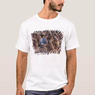 Antarctica, South Georgia Island, King penguins T-Shirt
