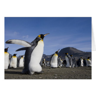 Antarctica, South Georgia Island (UK), King 5 Card