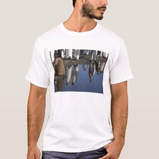 Antarctica, South Georgia Island (UK), King T-Shirt
