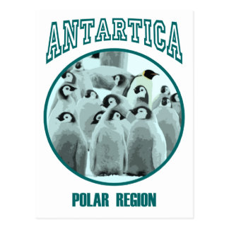 Antartica Postcard