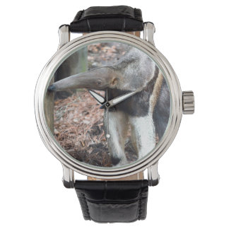 anteater nose raised wild animal image picture watch