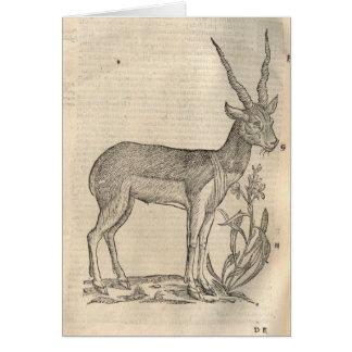 Antelope Card