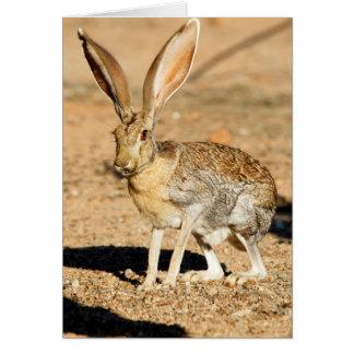 Antelope jackrabbit portrait, Arizona Card
