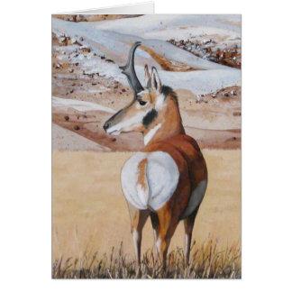 Antelope Note Card 2
