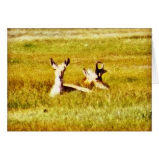 Antelope Pair Greeting Card