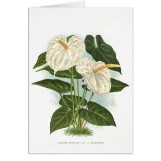 Anthurium Card
