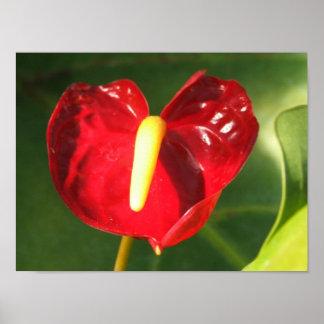 Anthurium Flower Print