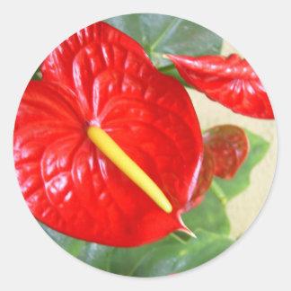 Anthurium Sticker