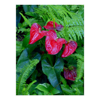 Anthuriums and Ferns Poster