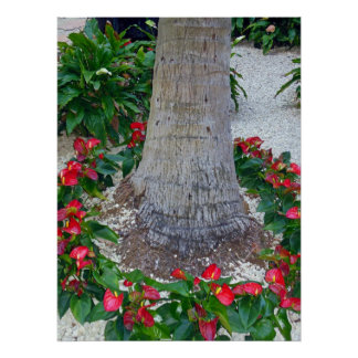 Anthuriums around a Coconut Tree Poster
