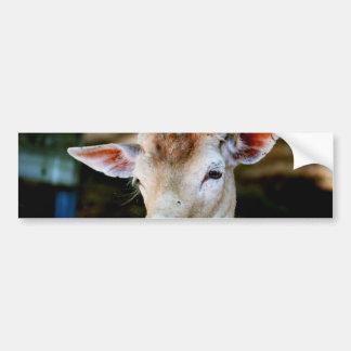 Antigua Fallow Deer Bumper Sticker