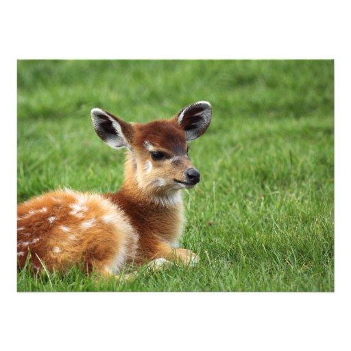 Antilope mignonne de bébé invitations personnalisables