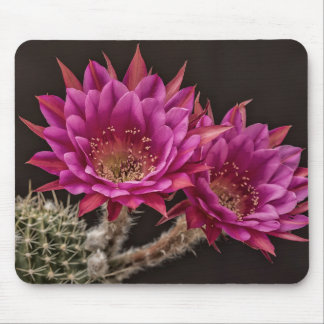 Antimatter blooms mouse pad
