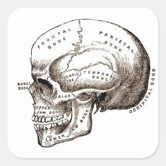 Antique Anatomy Anatomical Skull Square Sticker