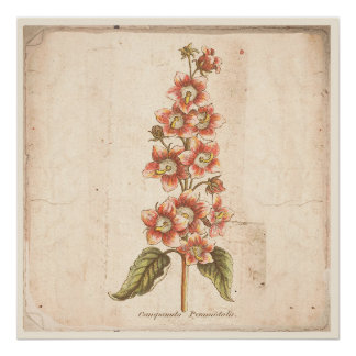 Antique Botanical Poster Campanula, Bellflower
