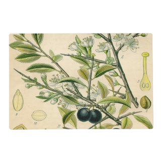 Antique Botanical Print Blackthorn Floral Drawing Laminated Place Mat