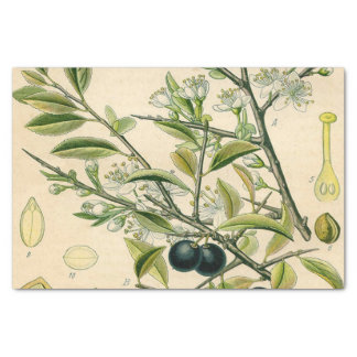 Antique Botanical Print Blackthorn Floral Drawing Tissue Paper