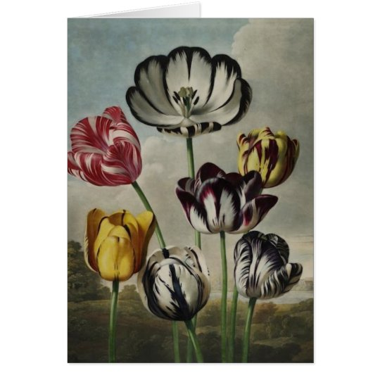 Antique botanicals tulips on notecards card