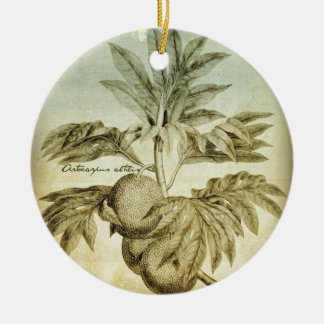 Antique Breadfruit Artocarpus Altilis Ceramic Ornament