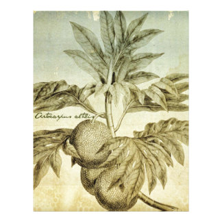 Antique Breadfruit Artocarpus Altilis Letterhead