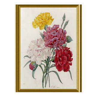 Antique Carnations In A Golden Frame Postcard