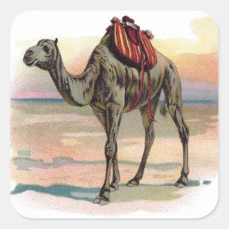 Antique Dromedary Camel Illustration Square Sticker