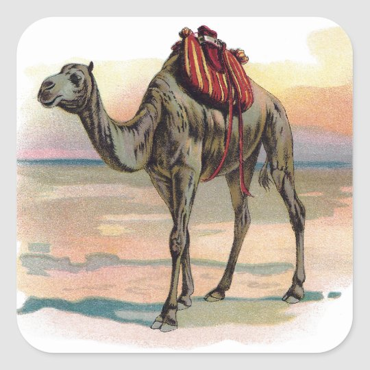 Antique Dromedary Camel Illustration Square Sticker