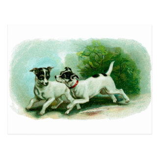 Antique Fox Terrier Illustration Postcard