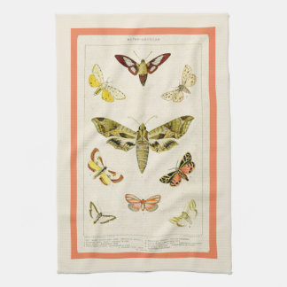Antique Inspired Chart of American Moths Kitchen Towel