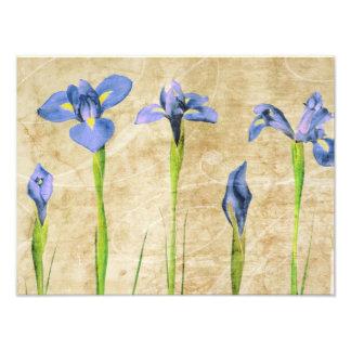 Antique Irises - Vintage Iris Background Customize Photo Print