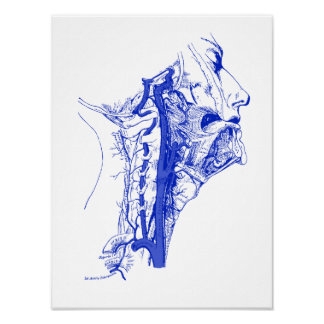 Antique Medical Image Human vertebral arteries Poster