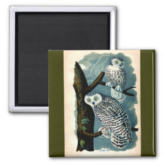 Antique Natural History Snowy Owl  Print Magnet