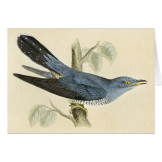 Antique Print of a Common Cuckoo Card