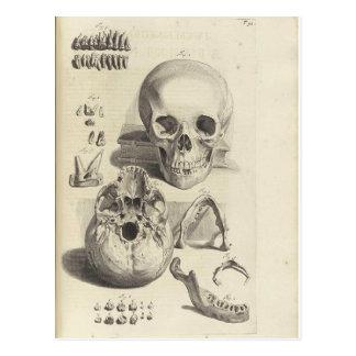 Antique print Skull Anatomy Postcard