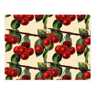 Antique Red Cherry Fruit Wallpaper Design Postcard