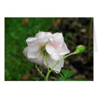 Antique Rose 2 Card