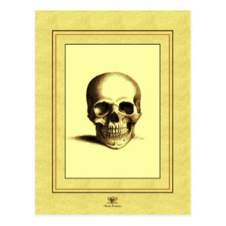 Antique Skull Postcard