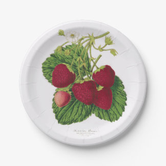 Antique Strawberry Picnic Paper Plate