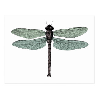 Antique Typographic Vintage Dragonfly Postcard