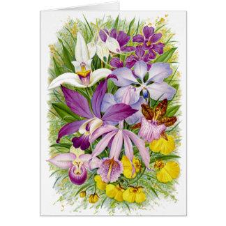 Antique/Vintage Orchids Floral Notecard