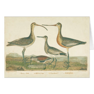 Antique Water Birds Marsh Illustration Card