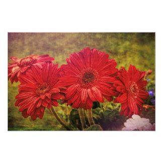 Antiqued Garden Photo Print