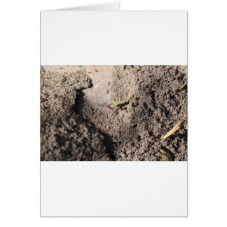 Ants Go Marching Card