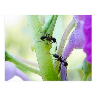 Ants In My Plants Postcard
