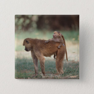 Anubis Baboon 2 Inch Square Button