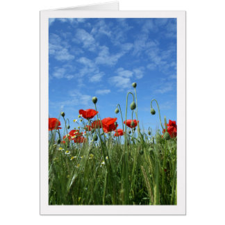 Any Occasion - Note Card - Red Poppies In A Meadow